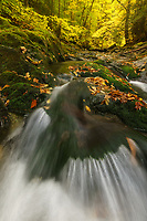 Autumn foliage along the White River, Green Mtn National Forest, Granville, Vermont