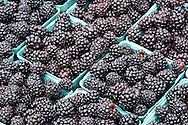 Blueberries, Old Monterey Farmers Market, California