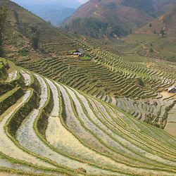 Rice field filled with water against a mountain hill, SaPa, Vietnam
