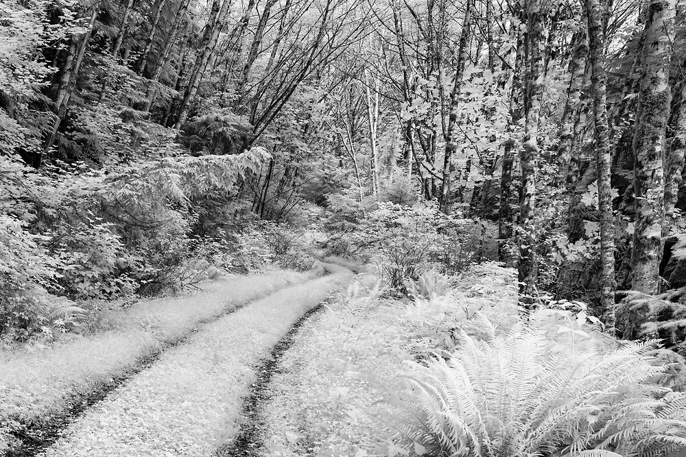 Old Logging Road - Olympic National Forest - Infrared Black & White