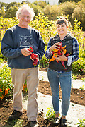 Frank Morton and Lane Selman at Gathering Together Farm evaluating Frank's peppers.