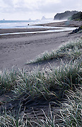 Black sands and native grasses of Oakura Beach, New Zealand