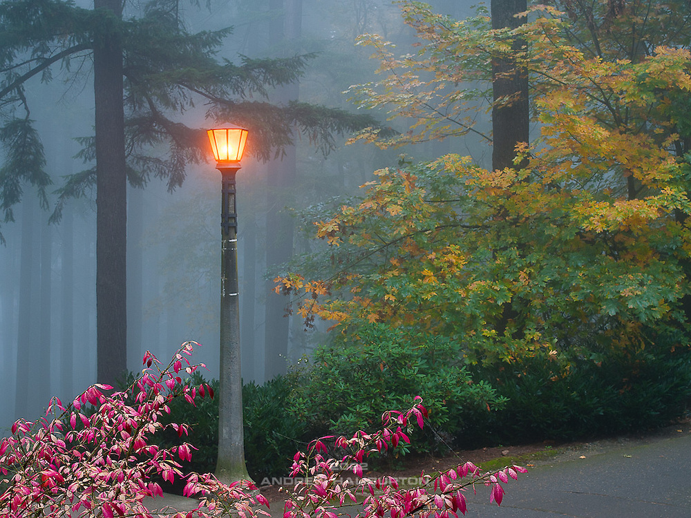 Historic light fixture and firs, Mount Tabor Park, Portland, Oregon, USA