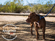 Janette is a 3 year old spayed pit mix.  She was found as a stray in August.