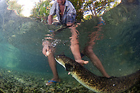 In the village of Waai, Ambon, a freshwater spring is home to a population of large eels.  These animals are considered lucky if seen and visitors can ask the local custodian to tempt the eels out with raw eggs.