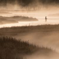 Fishing in the early dawn mist, Yellowstone