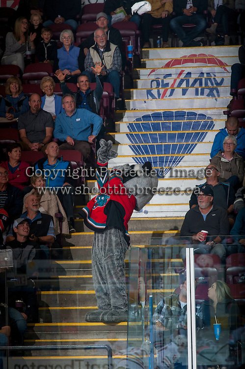 KELOWNA, CANADA - SEPTEMBER 24: Rocky Racoon, the mascot of the Kelowna Rockets throws a t-shirt into the crowd on September 24, 2016 at Prospera Place in Kelowna, British Columbia, Canada.  (Photo by Marissa Baecker/Shoot the Breeze)  *** Local Caption *** Rocky Racoon; mascot;