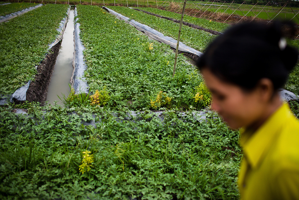 Tran Thi Kim Loan, 26, along with her husband Dung, 37, raise watermelons on a small bit of land rented from their neighbor. With the help of local NGO Anh Duong, partnered with French NGO Mekong Plus, the family has received several loans to finance the venture which can earn them about three hundred dollars every five months a considerable amount higher than many other local residents. Hau Giang Province, Vietnam.