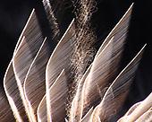 Fireworks - White Sparkles