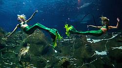 Weeki Weechee Mermaids at Adventure Aquarium, Camden NJ