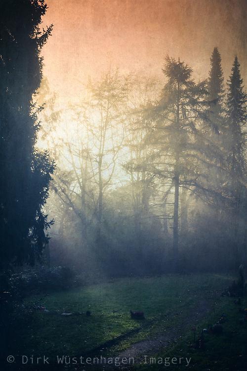 Sonnenaufgang auf Waldlichtung, Wuppertal, Deutschland, texturierte Fotografie