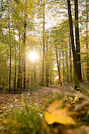 Europe, Germany, North Rhine-Westphalia, autumn in a forest at the Ruhrhoehenweg in the Ardey mountains near Wetter.....Europa, Deutschland, Nordrhein-Westfalen, Herbst im Wald am Ruhrhoehenweg im Ardeygebirge bei Wetter an der Ruhr.....[For each usage of my images the General Terms and Conditions are mandatory.]