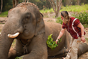 Patara Elephant Farm; Chiang Mai, Thailand: visitor using a bunch of leaves to brush the dirt off of an elephant.