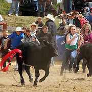 The children's calf scramble during the Southland Rodeo, Invercargill,  New Zealand. 29th January 2012