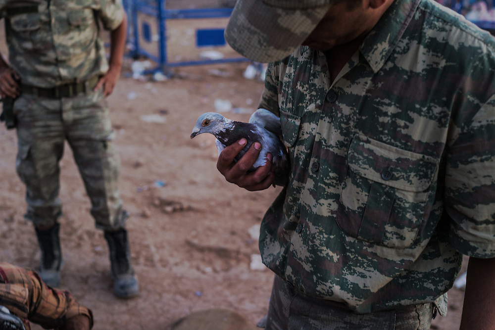 A turkish solider solider holding a pigeon while searching the bag of a syrian refugee, many of them brought their legion with them