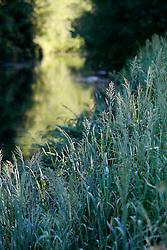 UK ENGLAND LEICESTERSHIRE AYLESTONE 30JUN15 - The river Soar at Aylestone Meadows in Leicestershire.<br /> <br /> jre/Photo by Jiri Rezac / WWF UK<br /> <br /> © Jiri Rezac 2015