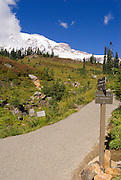 Mount Rainier from a junction on the Alta Vista Trail, Paradise Park, Mount Rainier National Park, Washington