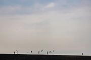 Kite à Saint-Malo