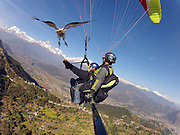 A real bird's eye view! Welcome to 'parahawking', the quirky sport that allows you to soar through the sky with VULTURES<br /> <br /> It's certainly a novel way to improve the interaction between man and bird. <br /> A new sport has been launched which gives paragliders the opportunity to interact with vultures as they glide above the land: Parahawking.<br /> Invented by avian expert Scott Mason to highlight the plight of Asia's endangered vultures, the sport combines ancient falconry methods with the modern techniques of paragliding, where both parties use rising currents of warm air to glide high above the land.<br /> <br /> Birds of prey are able to gain height and fly long distances without flapping their wings,' explains Mason. <br /> 'We as paragliders harness their natural ability to conserve energy by following them as we fly.'<br /> During the flight paragliders place small morsels of meat onto their gloved hands and the birds gently land to take the food, then fly gracefully away to find the next thermal.<br /> 'It's a perfect symbiotic relationship,' Mason said.<br /> <br /> 'Parahawking has gone from a personal experiment to a global phenomenon whereby several hundred people each year are taken on a tandem flight and given the unique opportunity to fly and interact with a bird of prey in its own environment.'<br /> <br /> Asia's vultures are virtually on the brink of extinction due to a drug called Diclofenac, an anti-inflammatory drug commonly administered to sick and dying livestock across Asia which is poisonous to vultures.   <br /> When the birds feed from animal carcasses that have been treated with Diclofenac, it causes renal failure and death. <br /> The White Backed Vulture, The Slender Billed Vulture and the Long Billed Vulture have declined 99.9 per cent in the last 15 years, meaning 40 million birds have died.<br /> 'Vultures are often misunderstood and have a rather unsavory image,' says Mason. <br /> 'By using vultures for Parahawking we hope to change our perceptions of them. Parahawking is our unique and innovative contribution to help