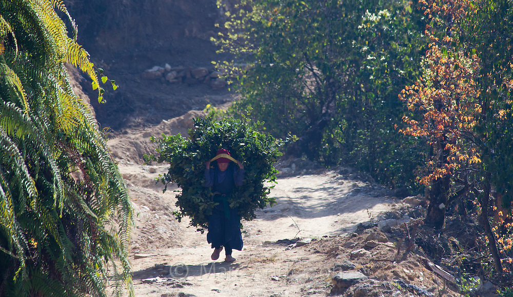 Nepali woman walking along a path and carrying bundles of leaves on her back, Nepal