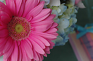 Gerbera Daisy, Hydrangea