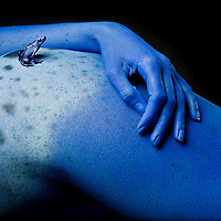 First Place FotoWeek DC 2012, Natural World Portfolio. Metamorphosis. Blue poison dart frog