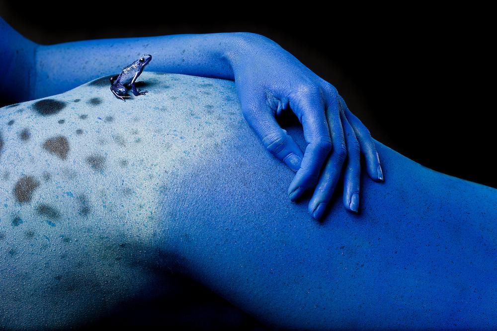 Blue dart frog   Robin Moore Photography