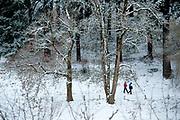 Snow day walk in Mount Tabor Park, Portland, Oregon, USA. Nikon D700. Nikon AF-S Nikkor 70-200mm f/2.8G ED VR II.