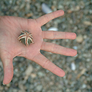A young man holds a round rock on which a small starfish has grasped all five fingers.