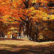 &quot;Resting Under Maples&quot; <br /> <br /> Beautiful and glorious trees in autumn tower above the headstones in this cemetery!