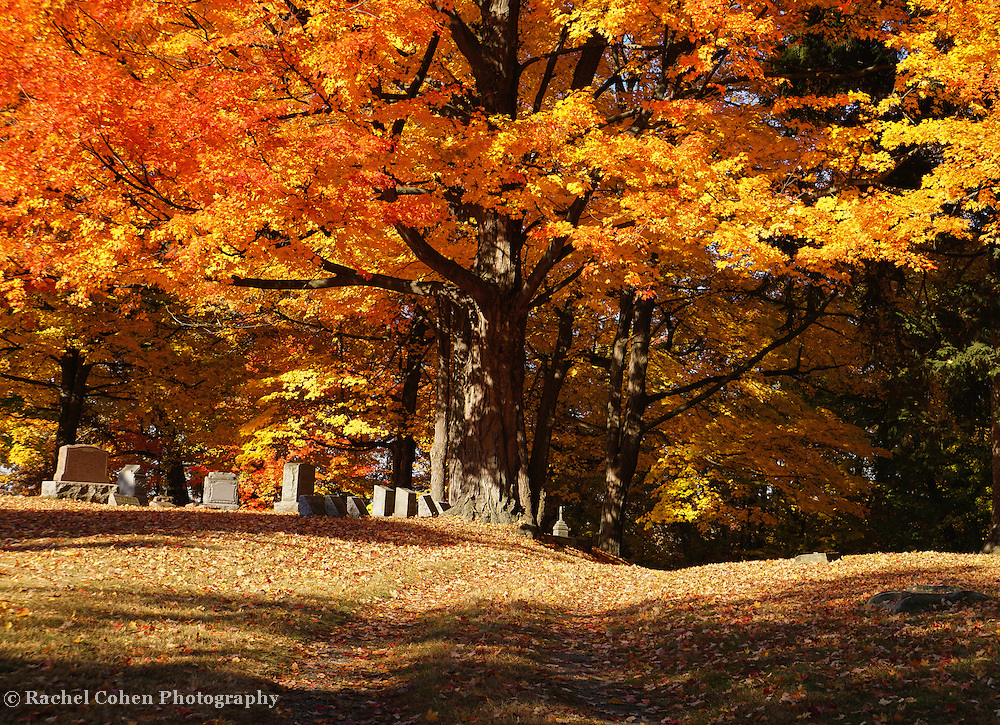 &quot;Resting Under Maples&quot; <br />