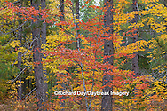 64776-01301 Fall color Schoolcraft County Upper Peninsula Michigan