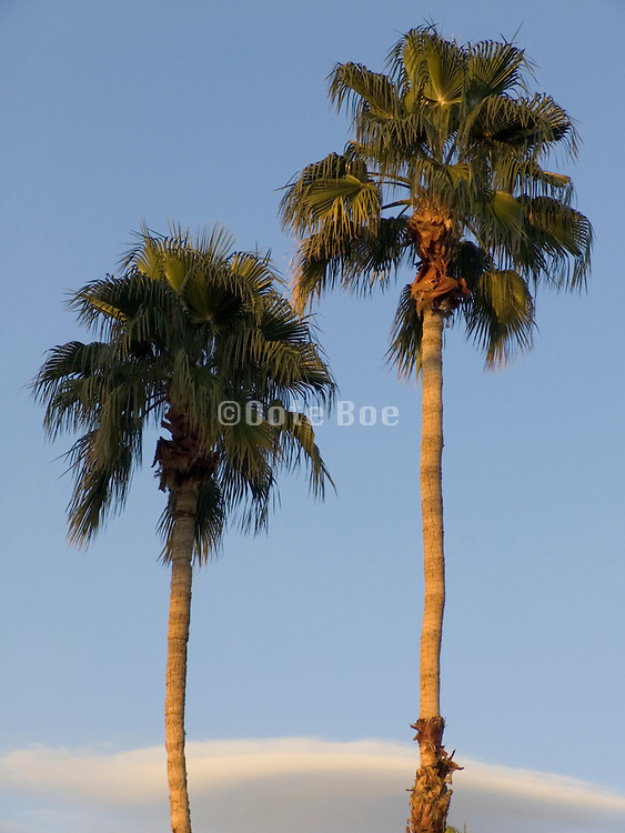 Palm trees against blue sky with cloud