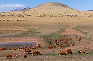 Spring Roundup on the CO Bar Ranch. Utilizing the ASO tank for this portion of their herd.