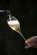 Pouring a glass of Argyle sparkling wine, Dundee, Willamette Valley, Oregon