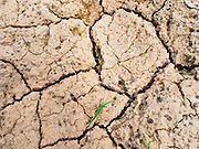 01 JULY 2015 - NON PHAK NAK, SUPHAN BURI, THAILAND:  Cracked earth in the bottom of an empty irrigation canal in Lopburi province. Normally, the canal is completely full at this time of year. Central Thailand is contending with drought. By one estimate, about 80 percent of Thailand's agricultural land is in drought like conditions and farmers have been told to stop planting new acreage of rice, the area's principal cash crop. Water in reservoirs are below 10 percent of their capacity, a record low. Water in some reservoirs is so low, water no longer flows through the slipways and instead has to be pumped out of the reservoir into irrigation canals. Farmers who have planted their rice crops are pumping water out of the irrigation canals in effort to save their crops. Homes have collapsed in some communities on the Chao Phraya River, the main water source for central Thailand, because water levels are so low the now exposed embankment is collapsing. This is normally the start of the rainy season, but so far there hasn't been any significant rain.    PHOTO BY JACK KURTZ