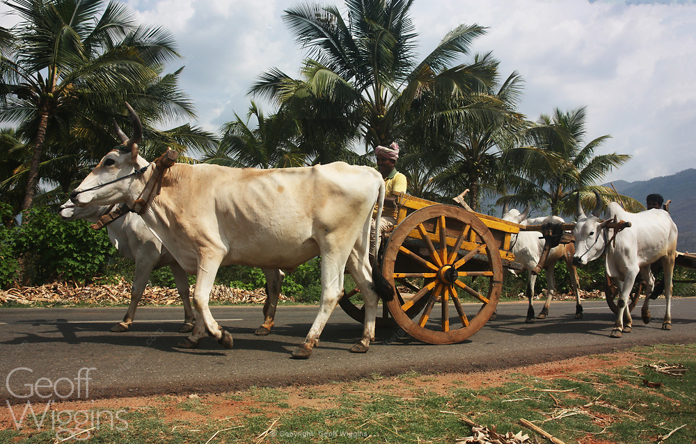 Bullock carts on the highway in rural Tamil Nadu, India