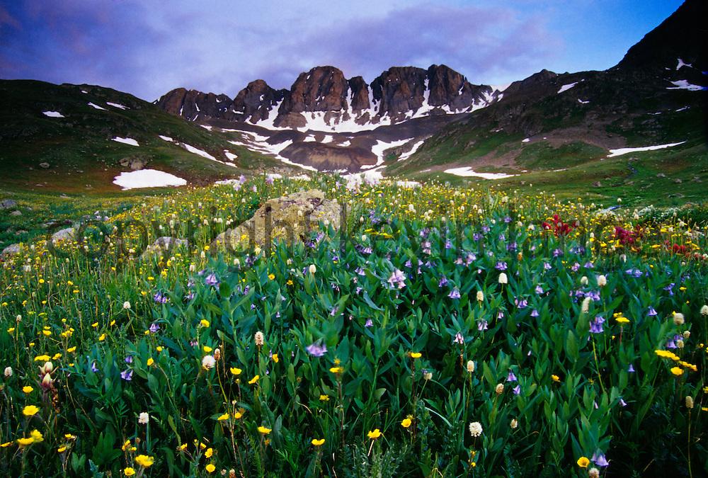 mountain wildflower landscape at american basin outside silverton, colorado.
