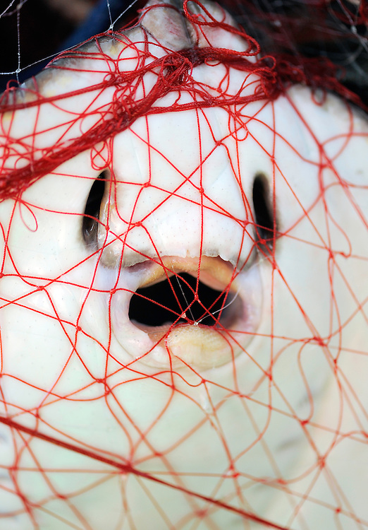 Sting ray (Dasyatis pastinaca), caught in a net<br /> Sardinia, Italy