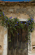 An old wooden door with morning glory growing above in Asos, Kefalonia, Greece