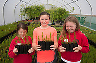 Three schoolgirls on day trip to help growing native trees at Trees for Life nursery, Dundreggan, Scotland. <br /> <br /> NO MR AVAILABLE