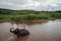 An elephant keeper bathes his elephant in the Pai River of Northern Thailand after a day of giving tourists rides.