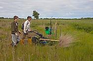 Sedge cutting on Sutton Fen RSPB Reserve, Norfolk, UK