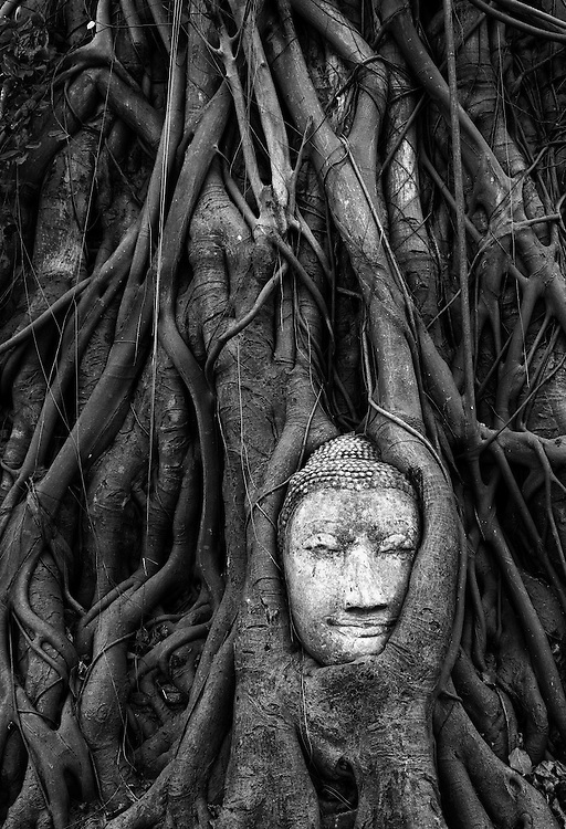 Buddha head enveloped in tree roots at Ayutthaya, Thailand.