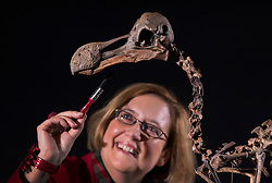 © Licensed to London News Pictures. 17/11/2016. Billingshurst, UK. Silke Lohmann prepares a rare dodo skeleton for display at Summers Place Auctions ahead of it's sale in their 'Evolution' Auction taking place on November 22, 2016.   Photo credit: Peter Macdiarmid/LNP