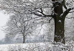 © Licensed to London News Pictures. 10/02/2012, London, UK.  Snow covered trees are seen on North Down in Surrey, south London, as the cold weather continue to affect much of Britain. Friday, Feb. 10, 2012. Photo credit : Sang Tan/LNP