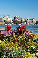 Flowers decorate downtown Victoria, BC, which features a mix of historical and new buildings on the Inner Harbour.