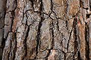 Sao Goncalo do Rio Preto_MG, Brasil...Parque Estadual do Rio Preto em Sao Goncalo do Rio Preto, Minas Gerais. Na foto detalhe de um arbusto...The Rio Preto State Park in Sao Goncalo do Rio Preto, Minas Gerais. In this photo a shurb...Foto: LEO DRUMOND / NITRO