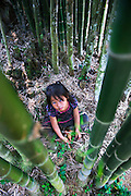 A Hmong girl playing among the bamboo near Luang Prabang, Laos.