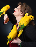 "Photo by Mara Lavitt -- Special to the Hartford Courant<br /> March 21, 2015, Middletown<br /> The eighth FeatherFest was held in Middletown by the Connecticut Parrot Society providing visitors with education about parrots and other birds. Concetta Ferragamo of Binghamton, NY, the northeast regional director of the American Federation of Aviculture, brought Queen of Bavaria Conures, an endangered species from Brazil and Central America. Ferragamo says, ""I'm passionate about aviculture, keeping the species, all of them, alive. The CITES and endangered species lists are growing every year. Unless we take them in as an avid aviculturalist, there will be no more."""